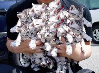 Hoard domains, not kittens.